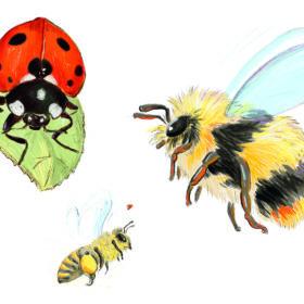 Hummel Marienkäfer Biene